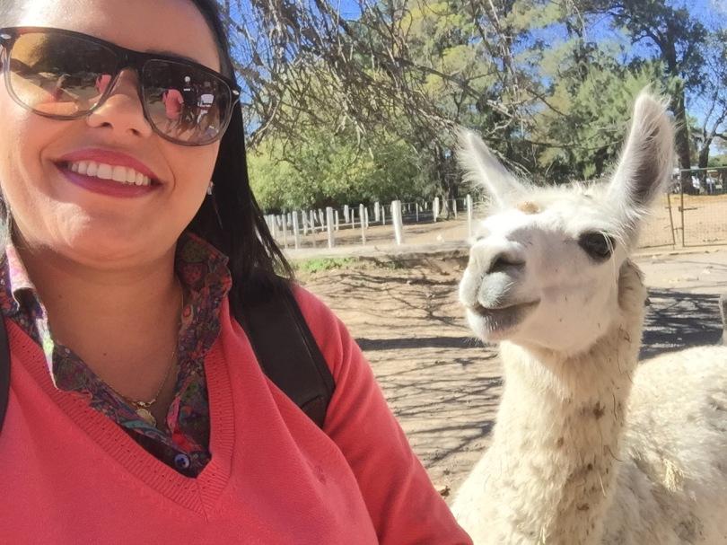Zoo Lujan - Llamas